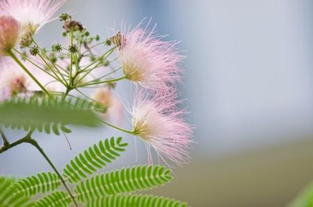 Marietta flower2