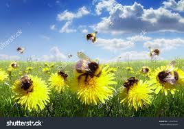 bumble-bees